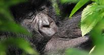 Rwanda Gorilla Tours - Genocide memorial Tours in Rwanda