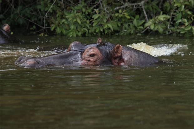 9 Days Uganda Rwanda Gorilla Safaris