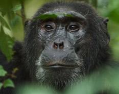 18 Days Best of Uganda Rwanda