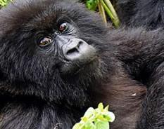 3 Days Bwindi Gorilla Tour