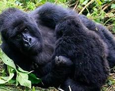 9 days Rwanda Uganda Gorilla Trek