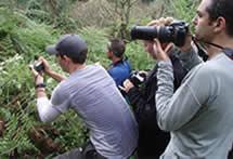 Uganda Gorilla Safari - Double Gorilla Tracking