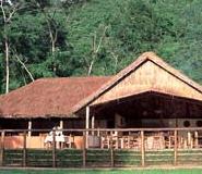 gorilla forest camp uganda