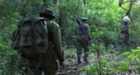 Kahuzi Biega Park- Gorilla tracking Congo