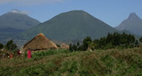 Volcanoes Safari Gorilla Trekking - Rwanda