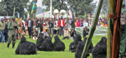 gorilla naming ceremony