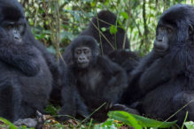 Comparisons in Gorilla trekking