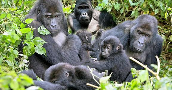 Primate safaris