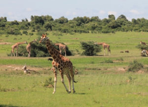 12 Days Wildlife Safari
