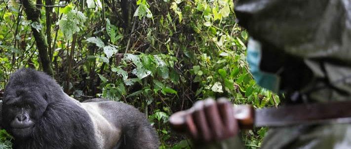 Another ranger killed in Virunga national park