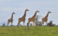 top wildlife safari in east Africa