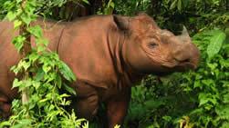 List of World's Endangered Species