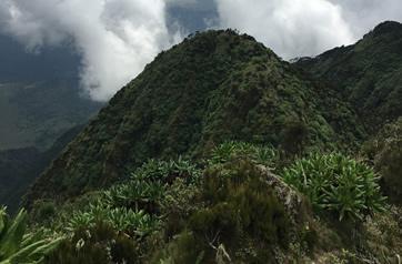 Volcano Hiking in Mgahinga