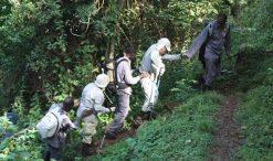 Porters and hiring stick for gorilla trekking