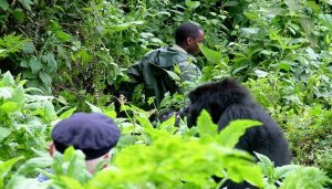 Uganda Primates Safaris