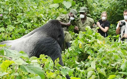 1-day-rwanda-gorilla-tour