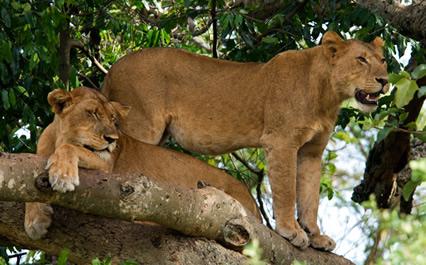 10-days-uganda-wildlife-safari