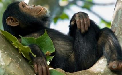 5-days-rwanda-gorillas-chimpanzee-safari