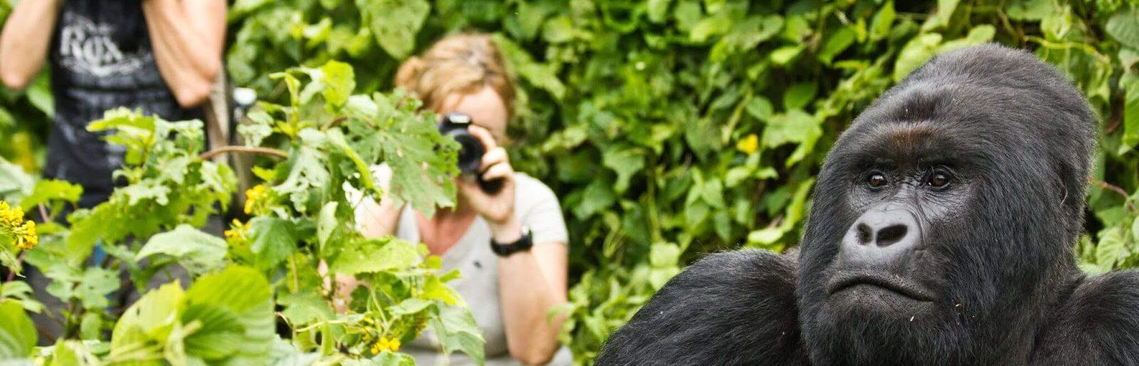 Rwanda gorillas safari