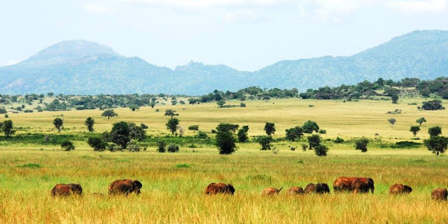 Best parks in Uganda