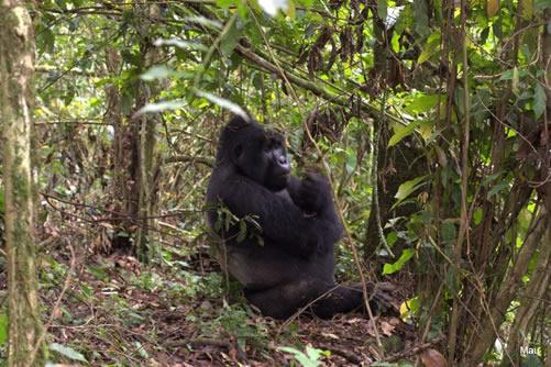 3 Days Bwindi Gorilla trip