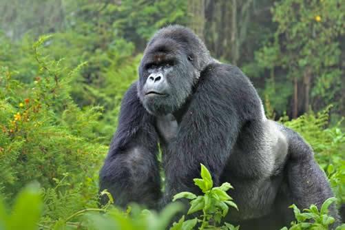 7 Days Uganda gorillas, chimps and wildife