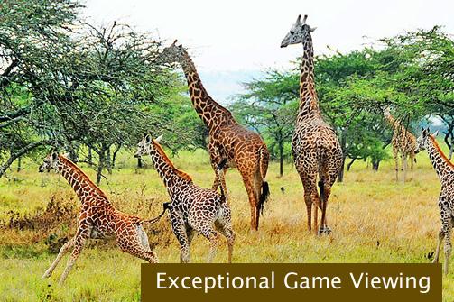 Game viewing in Uganda and Rwanda
